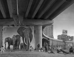 Underpass with Elephants - Nick Brandt - Inherit the Dust
